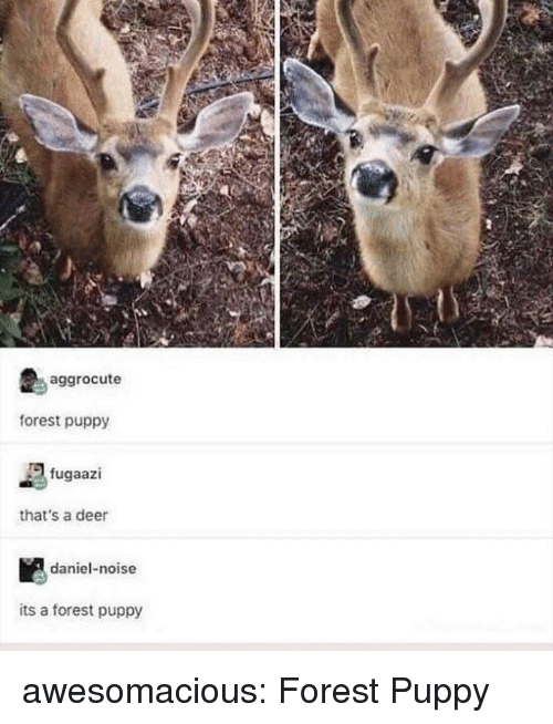 Deer, Tumblr, and Blog: aggrocute  forest puppy  fugaazi  that's a deer  daniel-noise  its a forest puppy awesomacious:  Forest Puppy
