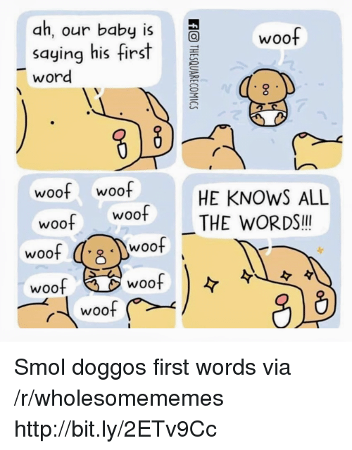 Http, Word, and Baby: ah, our baby is  saying his first  word  woo  woof woof  HE KNOWS ALL  woo THE WORDS!!  woof s  woof Smol doggos first words via /r/wholesomememes http://bit.ly/2ETv9Cc