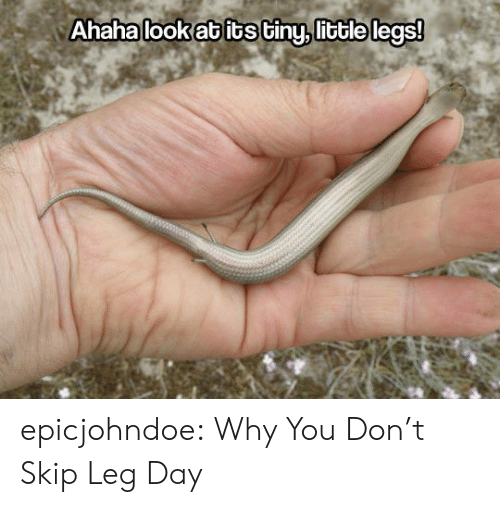 Tumblr, Blog, and Leg Day: Ahaha look ab its tiny, little legs! epicjohndoe:  Why You Don't Skip Leg Day