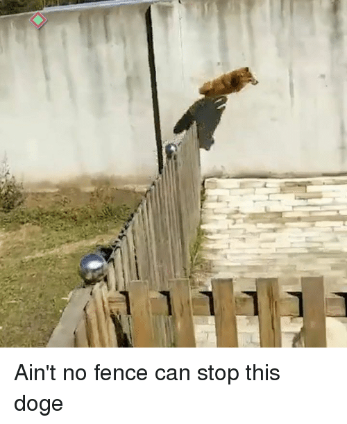 Dank, Doge, and 🤖: Ain't no fence can stop this doge