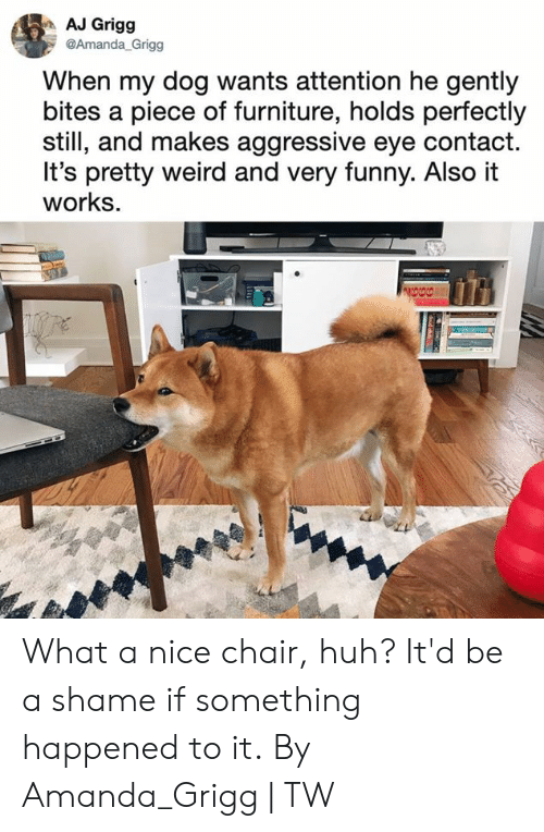 A Shame: AJ Grigg  @Amanda_Grigg  When my dog wants attention he gently  bites a piece of furniture, holds perfectly  still, and makes aggressive eye contact.  It's pretty weird and very funny. Also it  works. What a nice chair, huh? It'd be a shame if something happened to it.  By Amanda_Grigg | TW