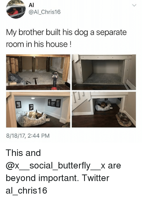 Memes, Twitter, and Butterfly: Al  @Al_Chris16  My brother built his dog a separate  room in his house  8/18/17, 2:44 PM This and @x__social_butterfly__x are beyond important. Twitter al_chris16