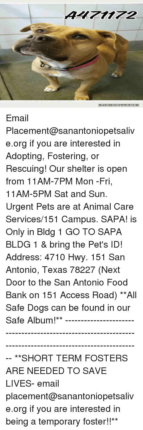 Dogs, Food, and Memes: AL712 Email Placement@sanantoniopetsalive.org if you are interested in Adopting, Fostering, or Rescuing!  Our shelter is open from 11AM-7PM Mon -Fri, 11AM-5PM Sat and Sun.  Urgent Pets are at Animal Care Services/151 Campus. SAPA! is Only in Bldg 1 GO TO SAPA BLDG 1 & bring the Pet's ID! Address: 4710 Hwy. 151 San Antonio, Texas 78227 (Next Door to the San Antonio Food Bank on 151 Access Road)  **All Safe Dogs can be found in our Safe Album!** ---------------------------------------------------------------------------------------------------------- **SHORT TERM FOSTERS ARE NEEDED TO SAVE LIVES- email placement@sanantoniopetsalive.org if you are interested in being a temporary foster!!**