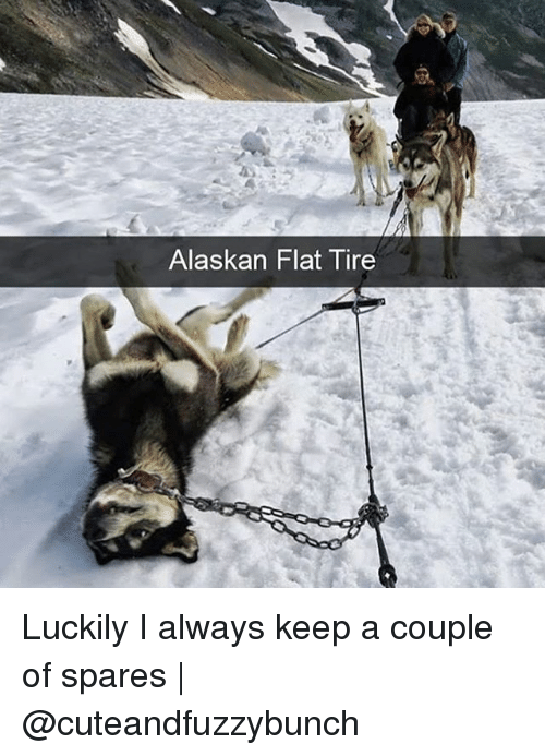 Memes, 🤖, and Couple: Alaskan Flat Tire Luckily I always keep a couple of spares   @cuteandfuzzybunch