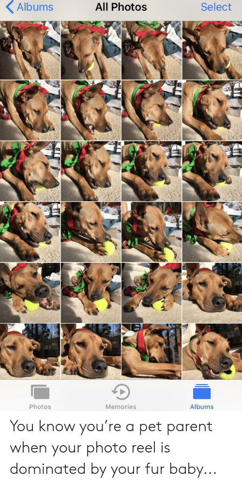 Baby, Photos, and Pet: Albums  All Photos  Select  Photos  Memories  Albums You know you're a pet parent when your photo reel is dominated by your fur baby...