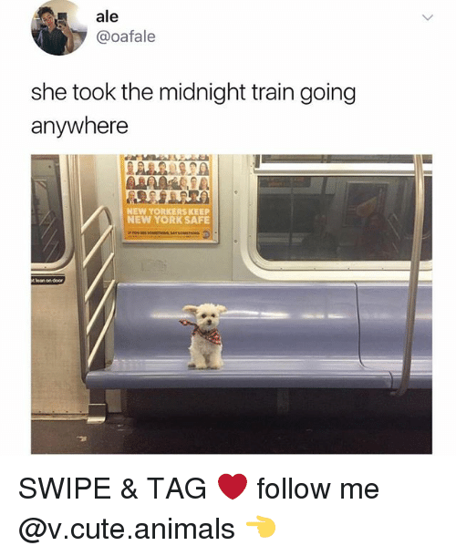 Cute animals: ale  @oafale  she took the midnight train going  anywhere  NEW YORKERS KEE  NEW YORK SAFE  l  ean on  door SWIPE & TAG ❤️ follow me @v.cute.animals 👈