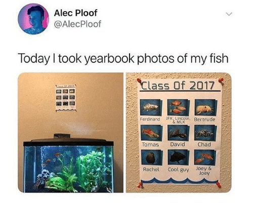 Cool, Fish, and Lincoln: Alec Ploof  @AlecPloof  Today I took yearbook photos of my fish  Class Of 2017  Ferdinand JFK, Lincoln, Bertrude  & MLK  Tomas David Chad  Rachel Cool guy Joey  Joey