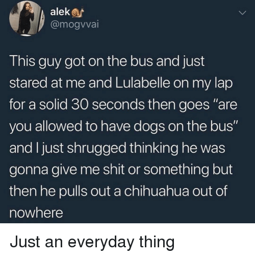 """Chihuahua, Dogs, and Shit: alek  @mogvvai  This guy got on the bus and just  stared at me and Lulabelle on my lap  for a solid 30 seconds then goes """"are  you allowed to have dogs on the bus""""  and I just shrugged thinking he was  gonna give me shit or something but  then he pulls out a chihuahua out of  nowhere Just an everyday thing"""