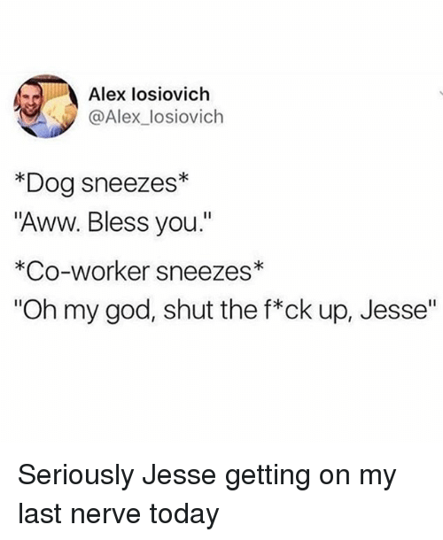 "Aww, God, and Memes: Alex losiovich  @Alex_losiovich  *Dog sneezes*  ""Aww. Bless you.""  *Co-worker sneezes  ""Oh my god, shut the f*ck up, Jesse"" Seriously Jesse getting on my last nerve today"