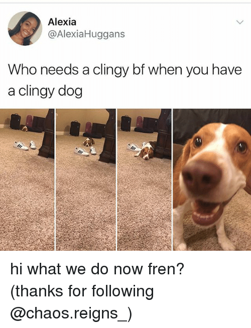 Memes, 🤖, and Dog: Alexia  @AlexiaHuggans  Who needs a clingy bf when you have  a clingy dog hi what we do now fren? (thanks for following @chaos.reigns_)