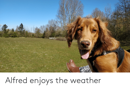 The Weather: Alfred enjoys the weather