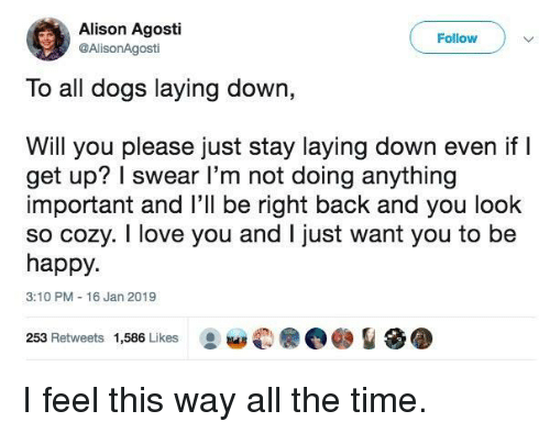 laying down: Alison Agosti  @AlisonAgosti  Follow  To all dogs laying down,  Will you please just stay laying down even if l  get up? I swear l'm not doing anything  important and l'll be right back and you look  so cozy. I love you and I just want you to be  happy.  3:10 PM 16 Jan 2019  253 Retweets 1,586 Likes I feel this way all the time.