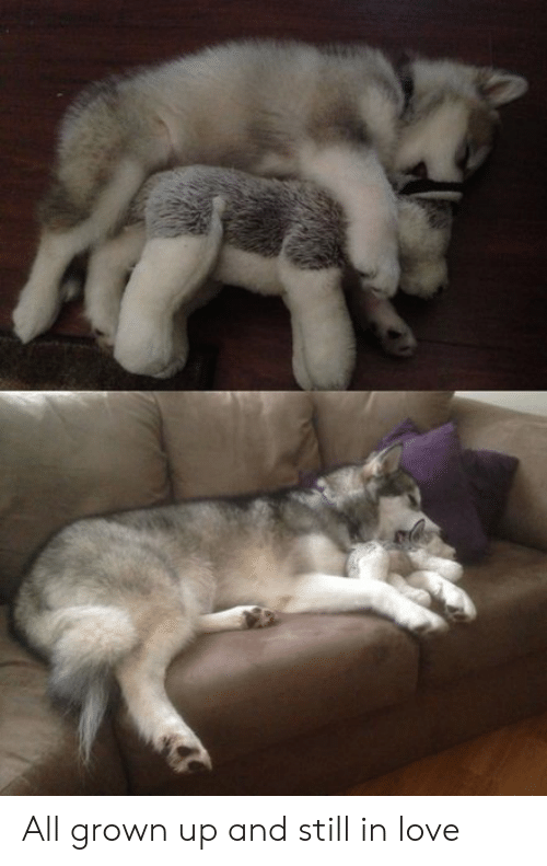 Love, All Grown Up, and All: All grown up and still in love