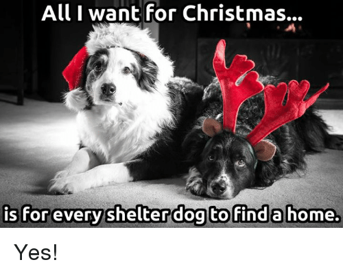 all i want for christmas: All I want for Christmas..  is for everyshelterdog to finda home Yes!