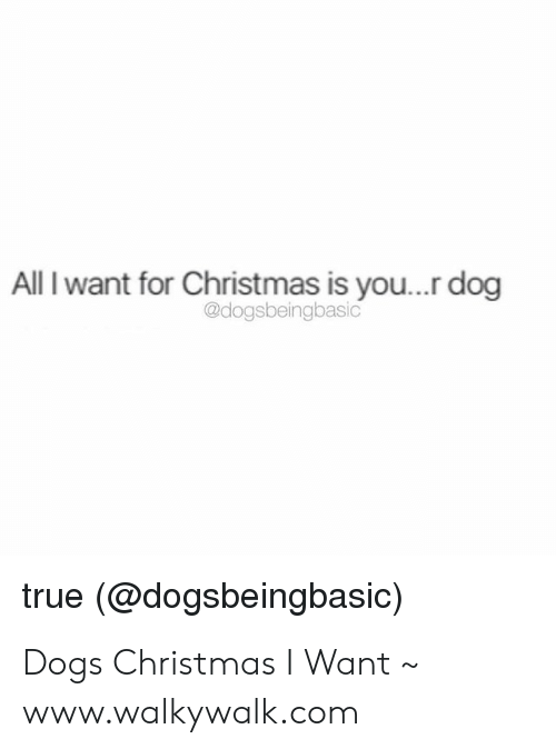 All I Want For Christmas Is You Meme.All I Want For Christmas Is You Dog True Dogs Christmas I