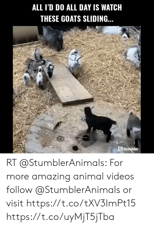 Animal Videos: ALL I'D DO ALL DAY IS WATCH  THESE GOATS SLIDING..  S Sturbler RT @StumblerAnimals: For more amazing animal videos follow @StumblerAnimals or visit https://t.co/tXV3ImPt15 https://t.co/uyMjT5jTba
