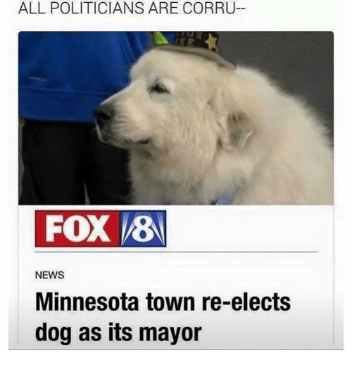 News, Minnesota, and Politicians: ALL POLITICIANS ARE CORRU-  FOX 8  NEWS  Minnesota town re-elects  dog as its mayor