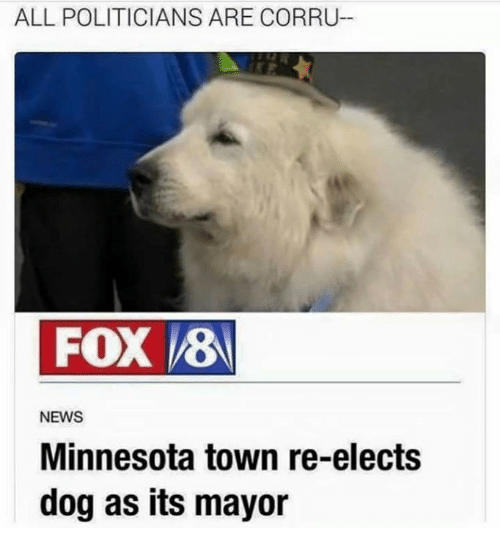 Dank, News, and Minnesota: ALL POLITICIANS ARE CORRU  FOX 8  NEWS  Minnesota town re-elects  dog as its mayor
