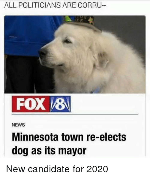 News, Minnesota, and Politicians: ALL POLITICIANS ARE CORRU-  FOX 8  NEWS  Minnesota town re-elects  dog as its mayor New candidate for 2020