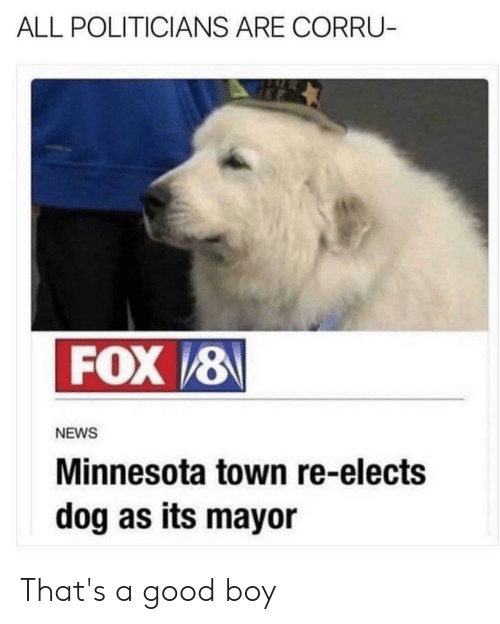 News, Reddit, and Good: ALL POLITICIANS ARE CORRU-  FOX 8  NEWS  Minnesota town re-elects  dog as its mayor That's a good boy