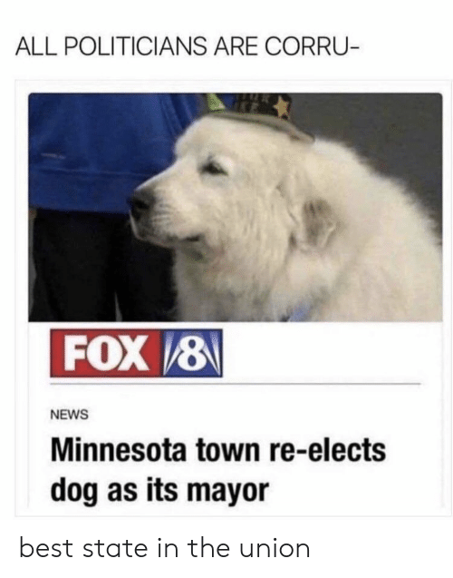 News, Best, and Fox News: ALL POLITICIANS ARE CORRU-  FOX&  NEWS  Minnesota town re-elects  dog as its mayor best state in the union