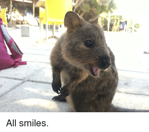 Smiles, All, and All Smiles