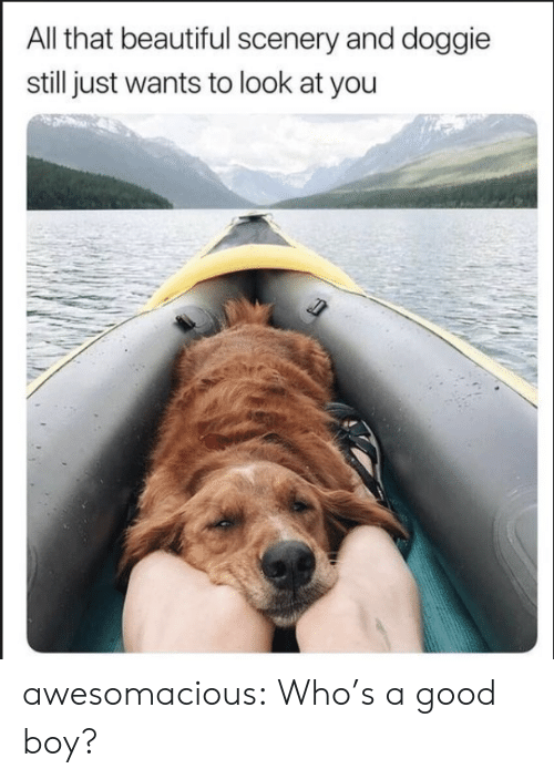 whos a: All that beautiful scenery and doggie  still just wants to look at you awesomacious:  Who's a good boy?