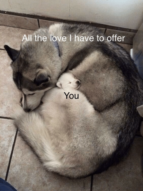 Love, All The, and All: All the love I have to offer  You