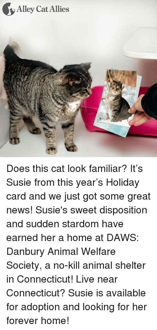 animal welfare: Alley Cat Allies Does this cat look familiar? It's Susie from this year's Holiday card and we just got some great news! Susie's sweet disposition and sudden stardom have earned her a home at DAWS: Danbury Animal Welfare Society, a no-kill animal shelter in Connecticut!   Live near Connecticut? Susie is available for adoption and looking for her forever home!
