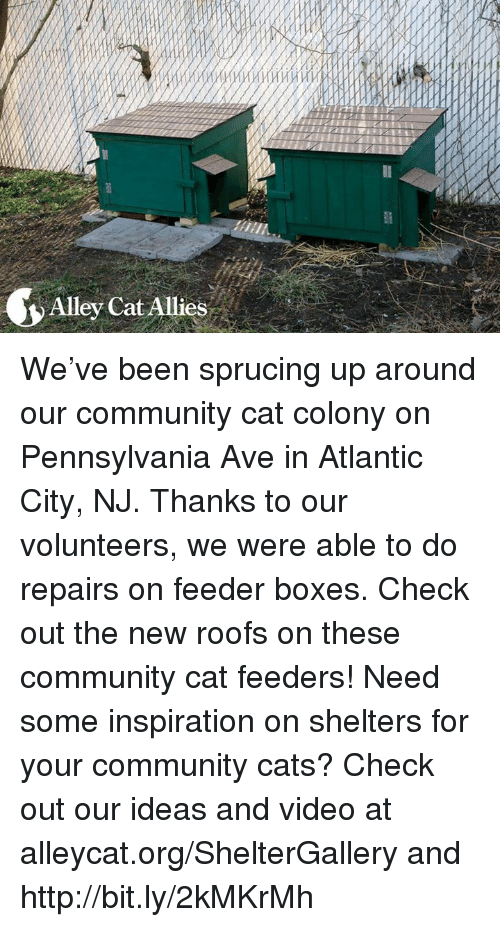 Memes, Atlantic City, and 🤖: Alley Cat Allies We've been sprucing up around our community cat colony on Pennsylvania Ave in Atlantic City, NJ. Thanks to our volunteers, we were able to do repairs on feeder boxes. Check out the new roofs on these community cat feeders! Need some inspiration on shelters for your community cats? Check out our ideas and video at alleycat.org/ShelterGallery and http://bit.ly/2kMKrMh