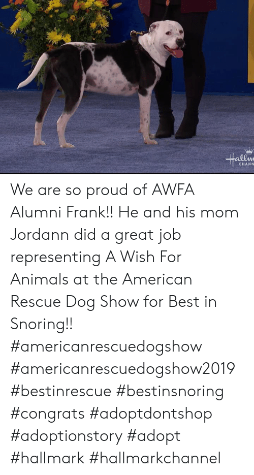 Hallmarkchannel: allw  CHANN We are so proud of AWFA Alumni Frank!! He and his mom Jordann did a great job representing A Wish For Animals at the American Rescue Dog Show for Best in Snoring!!   #americanrescuedogshow #americanrescuedogshow2019  #bestinrescue #bestinsnoring #congrats #adoptdontshop #adoptionstory #adopt #hallmark #hallmarkchannel
