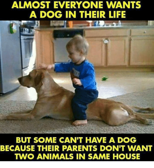 Animals, Life, and Memes: ALMOST EVERYONE WANTS  A DOG IN THEIR LIFE  BUT SOME CAN'T HAVE A DOG  BECAUSE THEIR PARENTS DON'T WANT  TWO ANIMALS IN SAME HOUSE