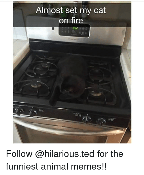 Animals Meme: Almost set my cat  on fire Follow @hilarious.ted for the funniest animal memes!!