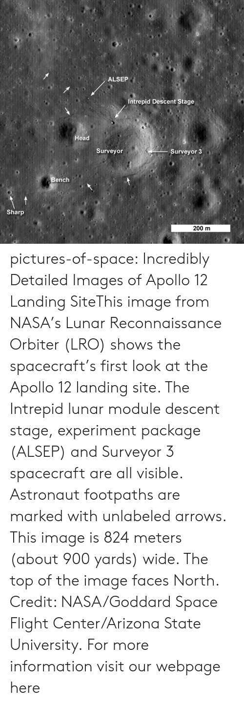 arizona state: ALSEP  Intrepid Descent Stage  Head  Surveyor  Surveyor 3  Bench  Sharp  200 m pictures-of-space:    Incredibly Detailed Images of Apollo 12 Landing SiteThis image from NASA's Lunar Reconnaissance Orbiter (LRO) shows the spacecraft's first look at the Apollo 12 landing site. The Intrepid lunar module descent stage, experiment package (ALSEP) and Surveyor 3 spacecraft are all visible. Astronaut footpaths are marked with unlabeled arrows. This image is 824 meters (about 900 yards) wide. The top of the image faces North. Credit: NASA/Goddard Space Flight Center/Arizona State University.  For more information visit our webpage here