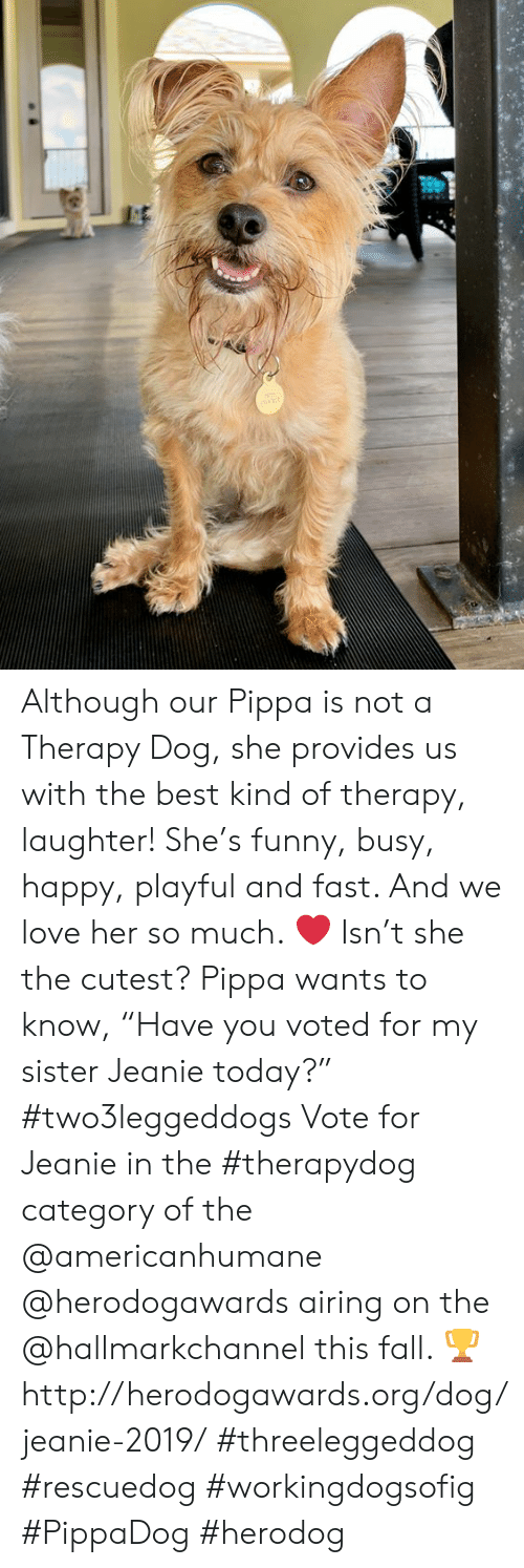 "Hallmarkchannel: Although our Pippa is not a Therapy Dog, she provides us with the best kind of therapy, laughter! She's funny, busy, happy, playful and fast. And we love her so much. ❤️ Isn't she the cutest?   Pippa wants to know, ""Have you voted for my sister Jeanie today?"" #two3leggeddogs Vote for Jeanie in the #therapydog category of the @americanhumane @herodogawards airing on the @hallmarkchannel this fall. 🏆 http://herodogawards.org/dog/jeanie-2019/  #threeleggeddog #rescuedog #workingdogsofig #PippaDog #herodog"