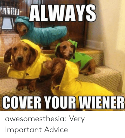 Wiener: ALWAYS  COVER YOUR WIENER awesomesthesia:  Very Important Advice