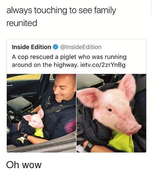 inside edition: always touching to see family  reunited  Inside Edition@lnsideEdition  A cop rescued a piglet who was running  around on the highway. ietv.co/2zrYnBg Oh wow