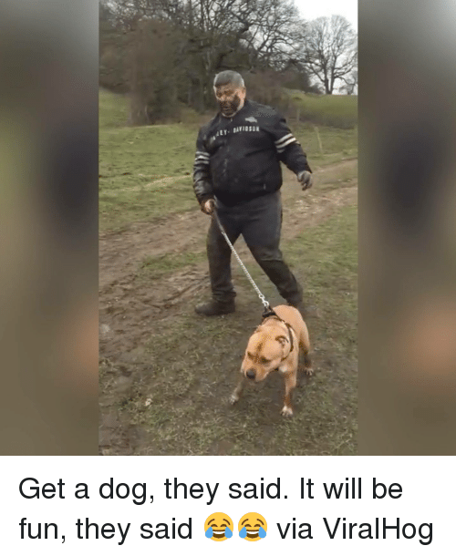 it will be fun they said: ALY- BAY10:DE Get a dog, they said. It will be fun, they said 😂😂  via ViralHog