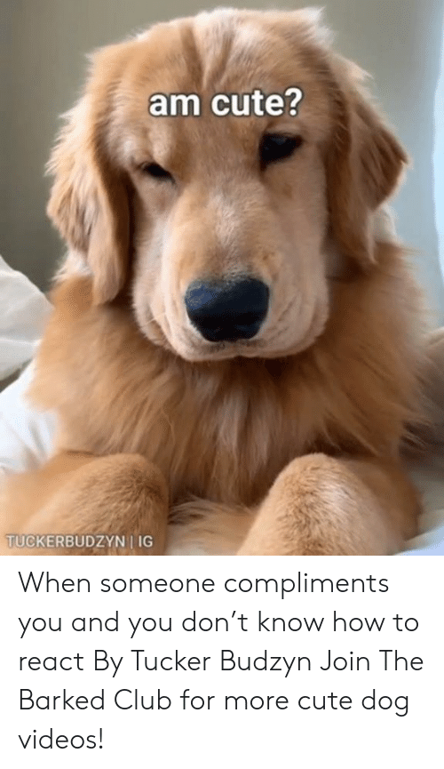 Club, Cute, and Dank: am cute?  TUCKERBUDZYN I IG When someone compliments you and you don't know how to react By Tucker Budzyn  Join The Barked Club for more cute dog videos!