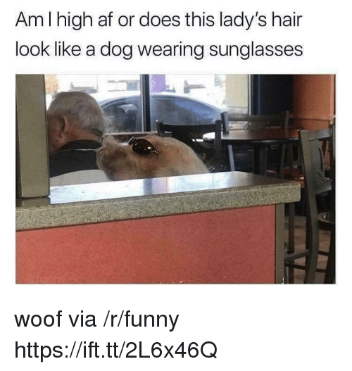 Af, Funny, and Hair: Am I high af or does this lady's hair  look like a dog wearing sunglasses  2 woof via /r/funny https://ift.tt/2L6x46Q