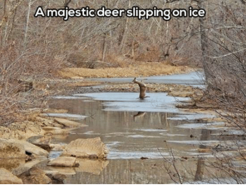 Dank, Deer, and 🤖: Amajestic deer slipping on ice