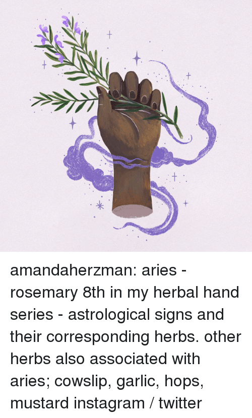Instagram, Tumblr, and Twitter: amandaherzman:  aries - rosemary 8th in my herbal hand series - astrological signs and their corresponding herbs. other herbs also associated with aries; cowslip, garlic, hops, mustard instagram / twitter