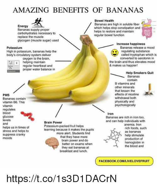 Energy, Facebook, and Mood: AMAZING BENEFITS OF BANANAS  Energy  Bananas supply proper  carbohydrates necessary to  replace the muscle  glycogen (muscle sugar) used  Bowel Health  Bananas are high in soluble fiber  which helps stop constipation and  helps to restore and maintain  regular bowel function  Increase happiness  Bananas release a mood  Potassium  High in potassium, bananas help the  body's circulatory system deliver  oxygen to the brain,  regulating substance  called tryptophan which is  converted to serotonin in  : helping maintain  the brain and thus elevates mood  & makes us happier!  regular heartbeat and  proper water balance in  Help Smokers Quit  Bananas  contain  B vitamins and  other minerals  that lessen the  effects of nicotine  withdrawal both  physically and  psychologically  PMS  Bananas contain  vitamin B6. This  vitamin  regulates  blood  glucose  levels  and  helps us in times of  stress and helps to  suppress cranky  moods  Iron  Bananas are rich in iron too,  and can help individuals with  Brain Power  Potassium-packed fruit helps  learning because it makes the pupils  anemia. Iron  rich foods, such  as bananas  help stimulate  production of  hemoglobin in  the blood and  more alert. Students find  that they have more  brain power and do  better on exams when  they eat bananas at  breakfast and lunch.  FACEBOOK.COM/LIVELOVEFRUIT https://t.co/1s3D1DACrN