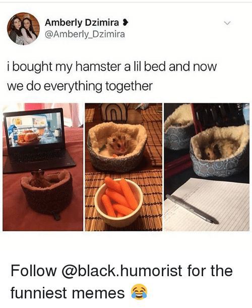 Memes, Black, and Hamster: Amberly Dzimira  @Amberly Dzimira  i bought my hamster a lil bed and now  we do everything together Follow @black.humorist for the funniest memes 😂