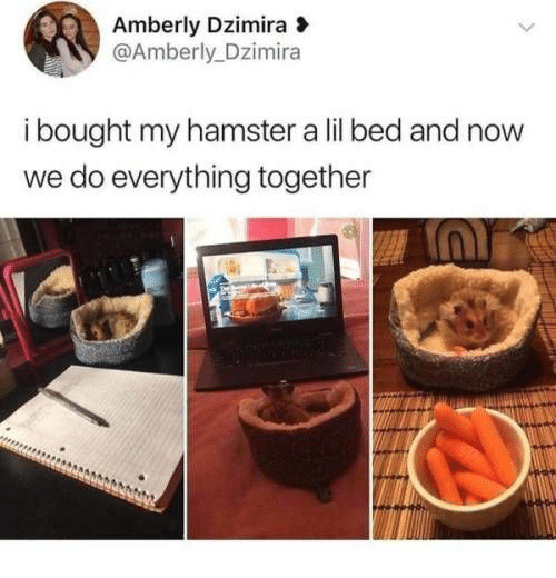 Hamster, Now, and Lil: Amberly Dzimira  @Amberly_Dzimira  i bought my hamster a lil bed and now  we do everything together