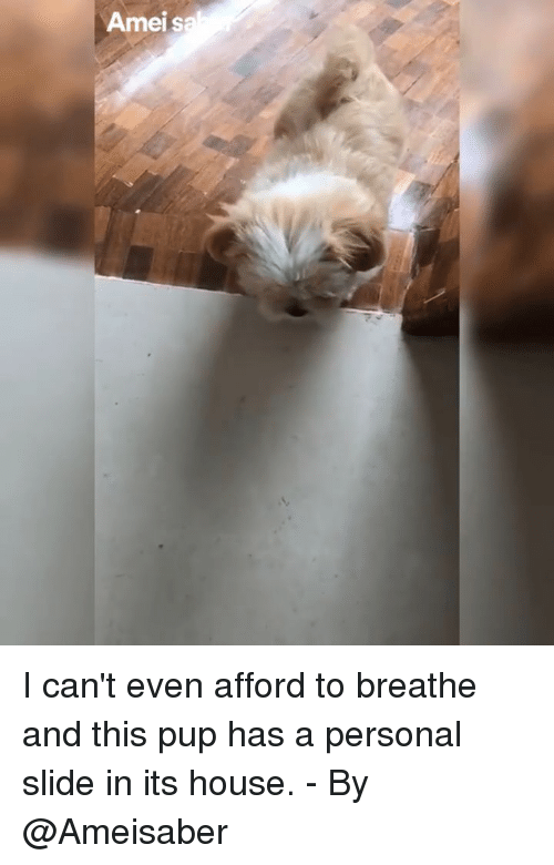 Memes, House, and Pup: Ameis I can't even afford to breathe and this pup has a personal slide in its house. - By @Ameisaber