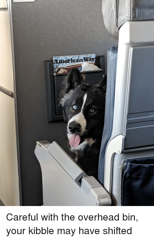 American, May, and Bin: American Wa Careful with the overhead bin, your kibble may have shifted