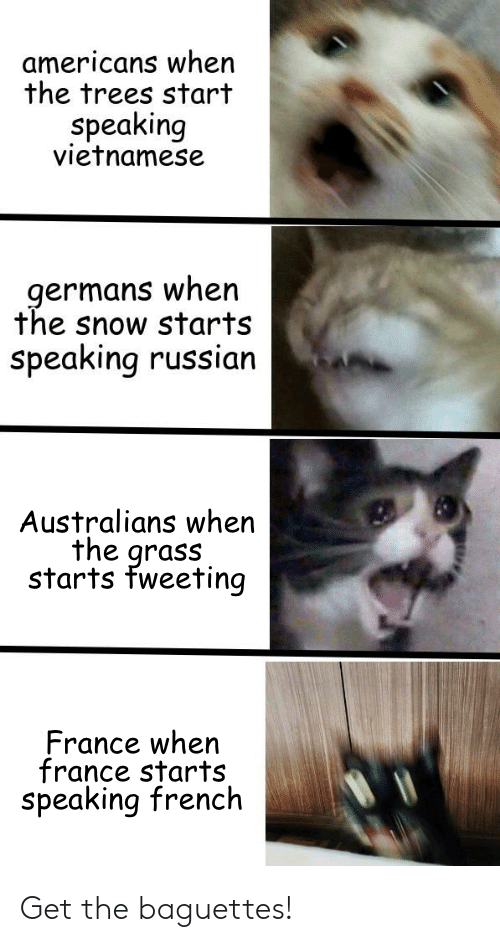 germans: americans when  the trees start  Speaking  vietnamese  germans when  the snow starts  speaking russian  Australians when  the grass  starts fweeting  France when  france starts  speaking french Get the baguettes!