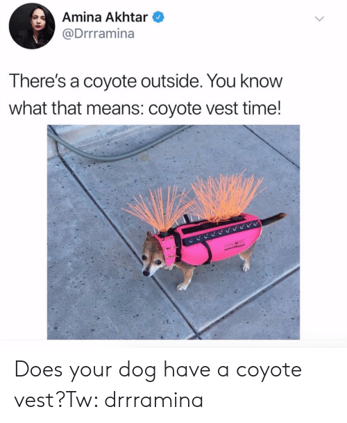 Coyote, Time, and Dog: Amina Akhtar  @Drrramina  There's a coyote outside. You knovW  what that means: coyote vest time! Does your dog have a coyote vest?Tw: drrramina