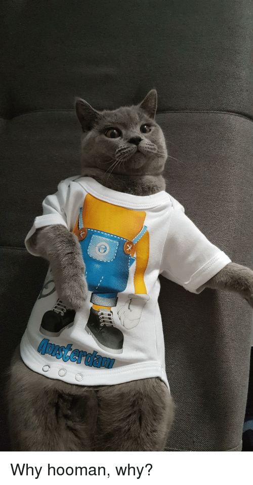 Amsterdam, Why, and Hooman: Amsterdam Why hooman, why?